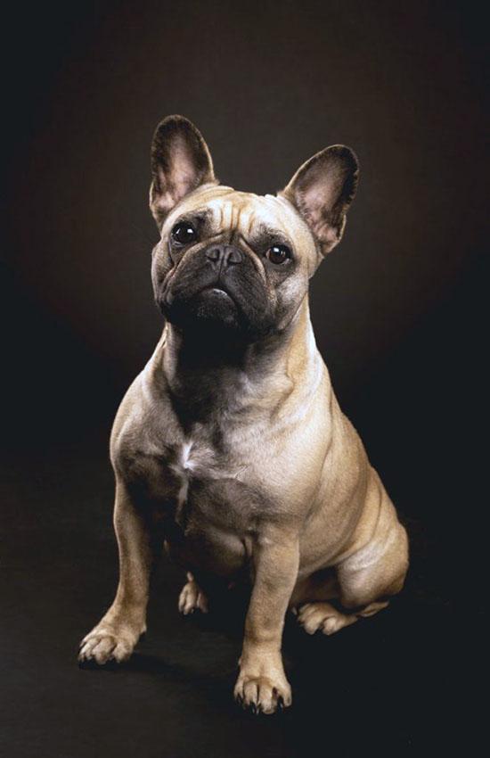 Portrait chien 2
